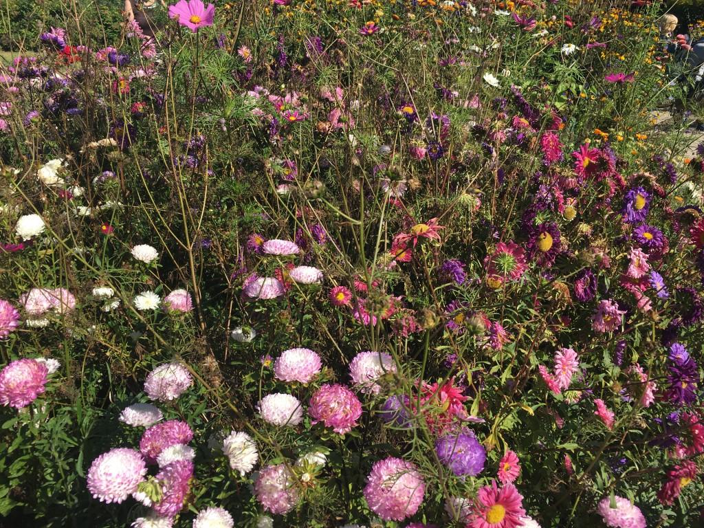 Blumen Nolde Stiftung