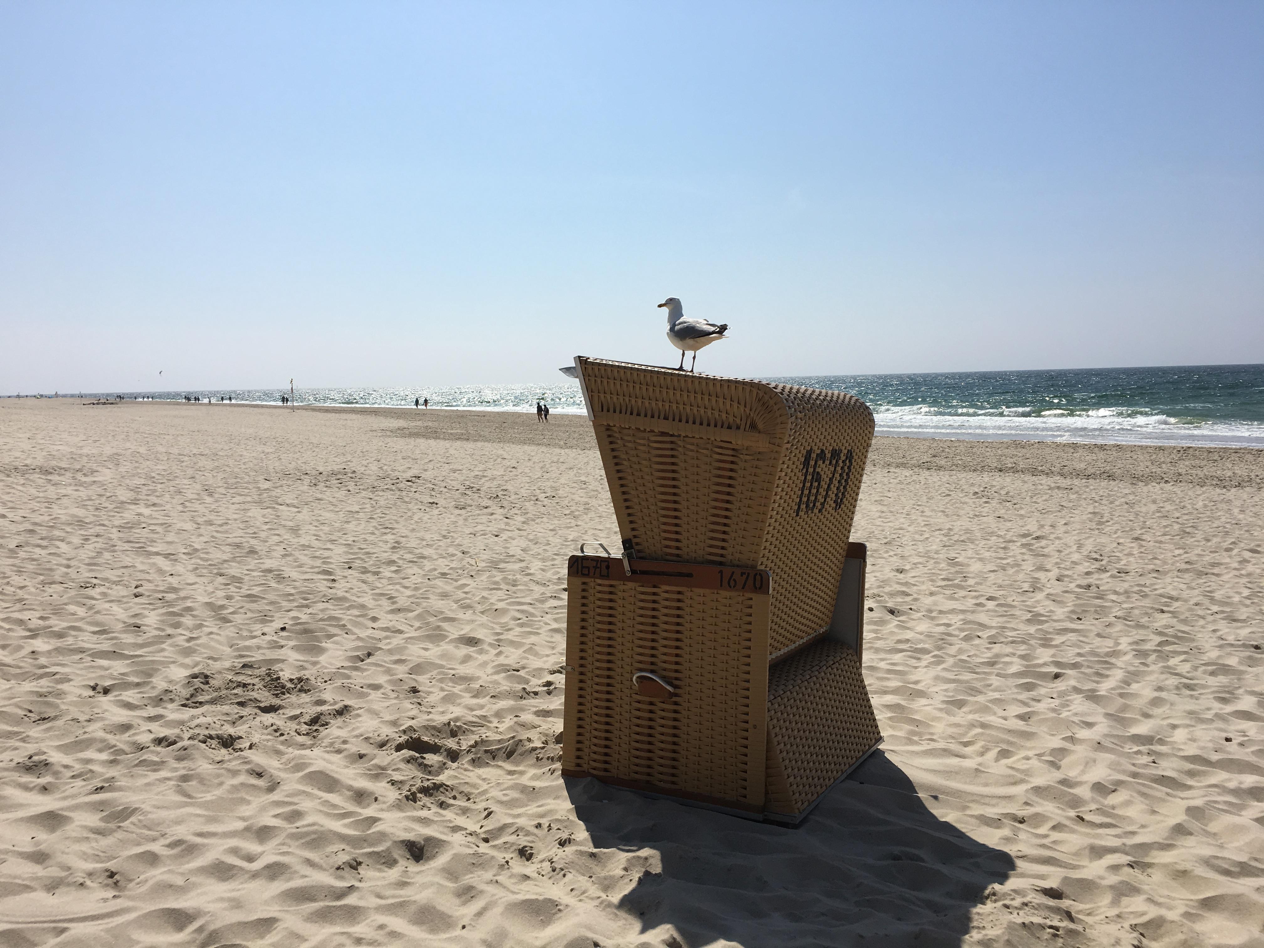 Strandkorb mit Möve