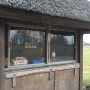 Sylt Ei vom Hansenhof